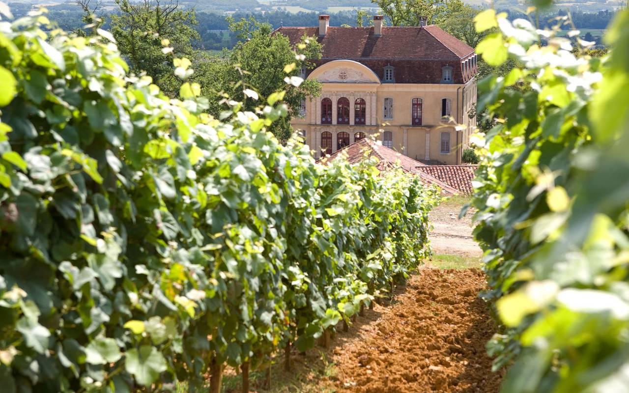 vignes, hôtel Lourdes, Hôtels Vinuales